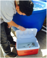 student playing with new fish for aquaponics garden